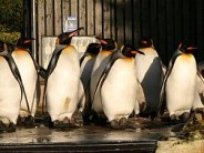 25. Birdland Park & Gardens (and its colony of king penguins)