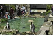 Birdland Park & Gardens, Bourton-on-the-Water