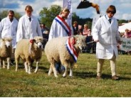 17. Moreton-in-Marsh Show