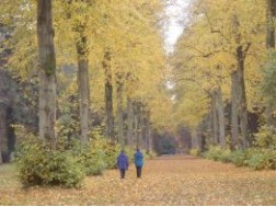 22. Two Amazing Arboreta - Westonbirt, the National Arboretum, and Batsford Arboretum