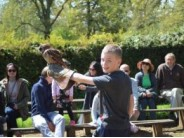 31. Cotswold Falconry Centre