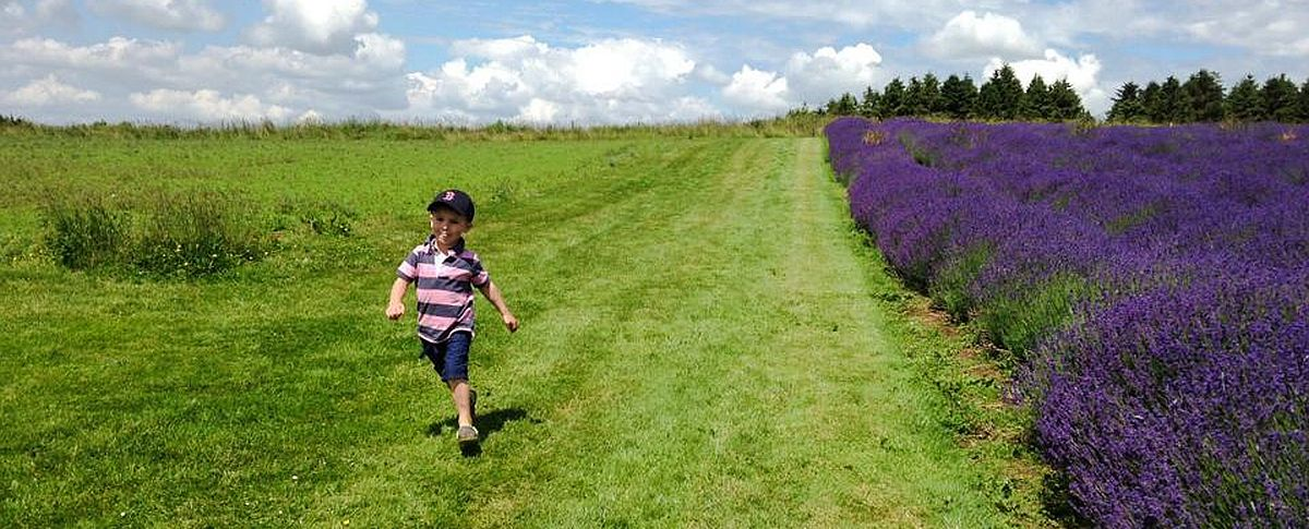 Sally-Anne Guibert took this picture of a carefree child at Cotswold Lavender at Snowshill.
