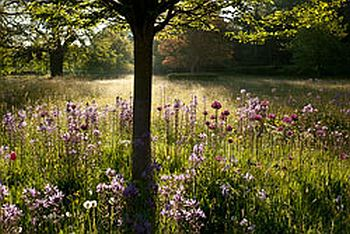 The Highgrove Meadows at Prince Charles' Cotswold home.