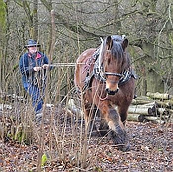 Horse logging proved a popular course in the Cotswolds