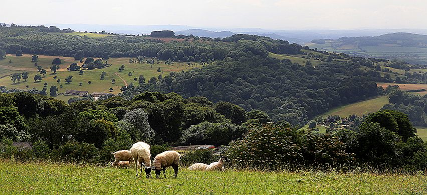 Sheep and rolling hills are an integral part of the Cotswolds Area of Outstanding Natural Beauty.