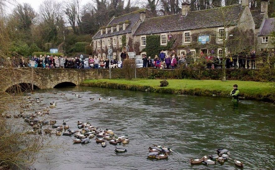 "Decoy ducks floating down the river in the first charity race which precedes ""the big one""."