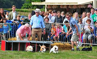Dogs are put through their paces at the show.