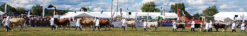 The traditional cattle parade at Moreton Show.