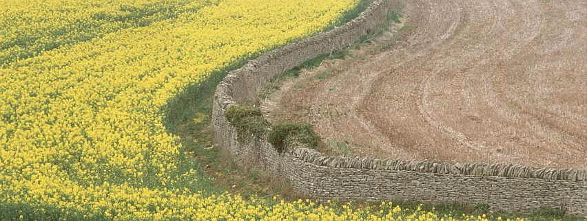 There have been stone walls in the Cotswolds since Neolithic times.