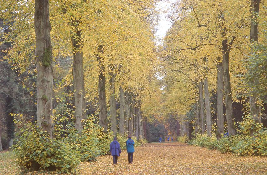 Visitors enjoying the glorious autumn colours at Westonbirt. Picture by Rob Fraser, courtesy Cotswolds Conservation Board.