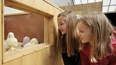 Visitors to Cotswold Birdland can enjoy a bird's eye view of newly-hatched chicks.