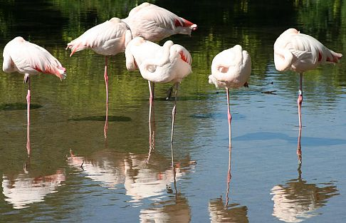 The flamingos at Birdland are another popular attraction.