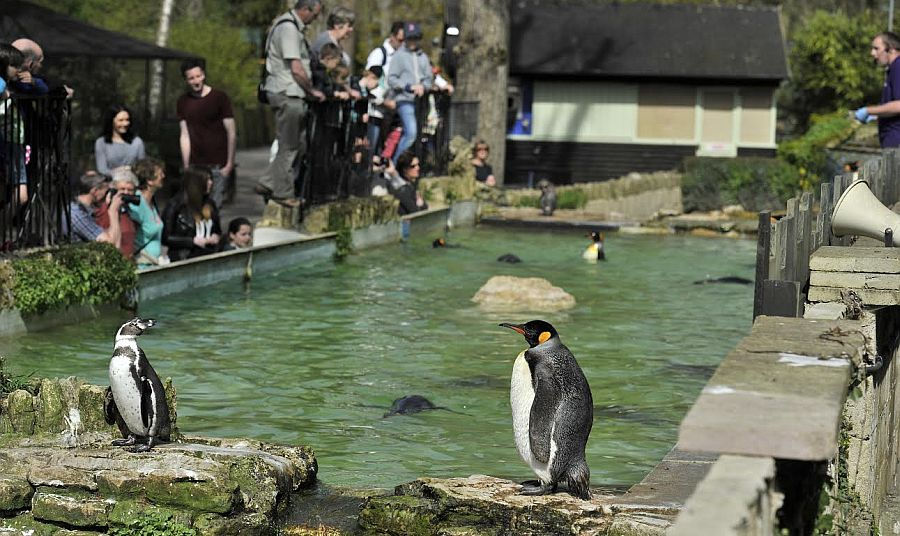 The king penguins really are the crown jewels at Cotswold Birdland in Bourton-on-the-Water.