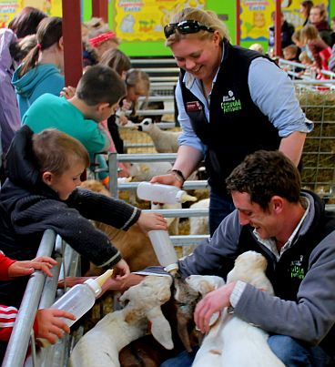 Bottle feeding the new-born lambs is always a popular attraction with visitors.