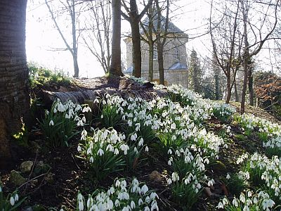 The Rococo Garden is famed for its annual display of snowdrops.
