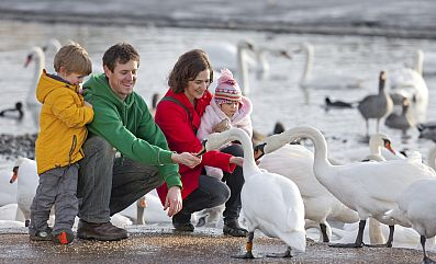 A visiting family feeds some of the resident swans.