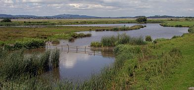 A view of some of the wetlands at Slimbridge.