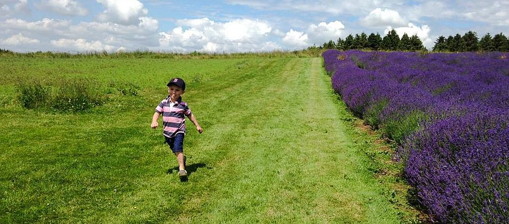This youngster certainly enjoyed his visit to Cotswold Lavender at Snowshill. Picture by Sally-Anne Guibert  www.cotswoldphotographycompany.co.uk