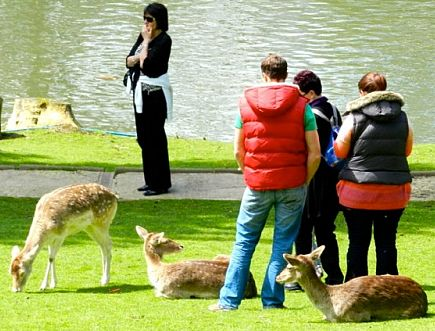 Visitors meet some of the residents at the Bird and Deer Park at Prinknash.