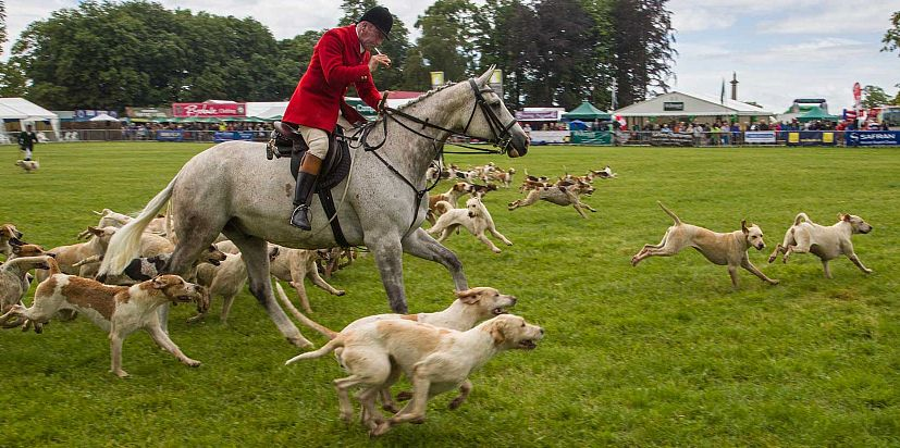 A rider puts his horse and hounds through their paces at the Cotswold Show.