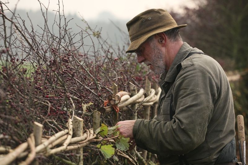 Hedge-laying is another of the Cotswolds Rural Skills that people can learn through specialist courses. Picture © Cotswolds Conservation Board