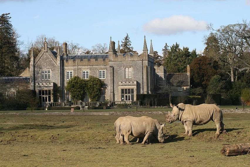 Rhinos in front of the stately home at the Cotswold Wildlife Park at Burford