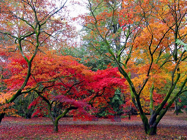 Autumn colours at Westonbirt Arboretum, near Tetbury.