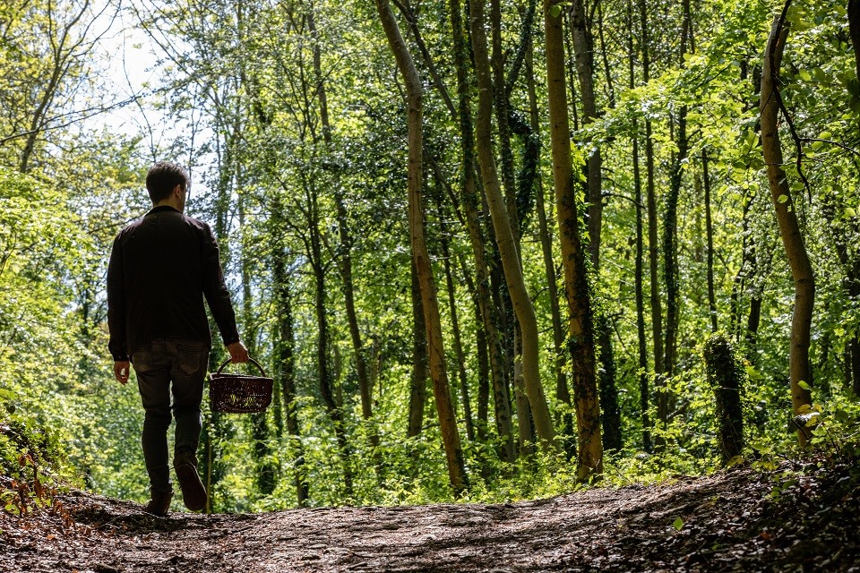 Wild foodie foraging experiences launch at Burleigh Court later this month