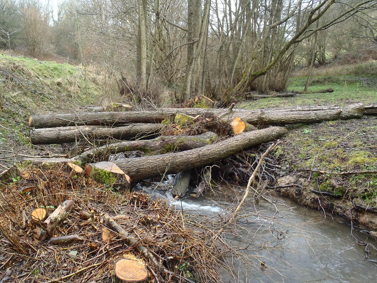 Natural flood management along the River Frome.